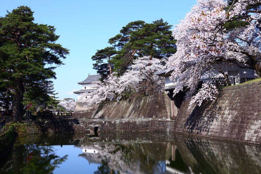 新発田城の春